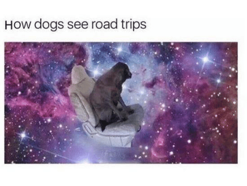 Dogs, How, and Trips: How dogs see road trips