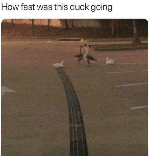 Duck, How, and Fast: How fast was this duck going