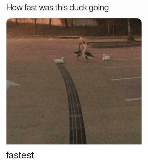 Duck, How, and Fast: How fast was this duck going fastest