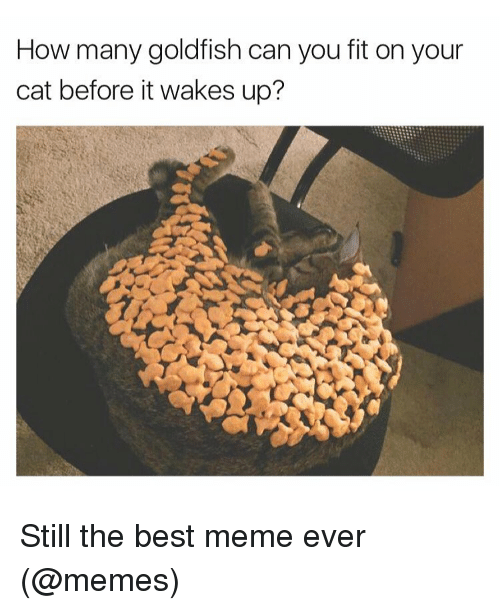 best memes ever: How many goldfish can you fit on your  cat before it wakes up? Still the best meme ever (@memes)