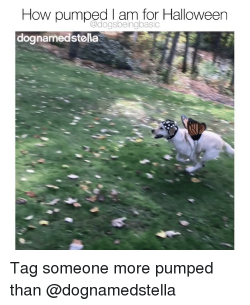 Halloween, Memes, and Tag Someone: How pumped I am for Halloween  dognamedstella  @dogsbeingbasic Tag someone more pumped than @dognamedstella