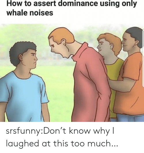 Too Much, Tumblr, and Blog: How to assert dominance using only  whale noises srsfunny:Don't know why I laughed at this too much…