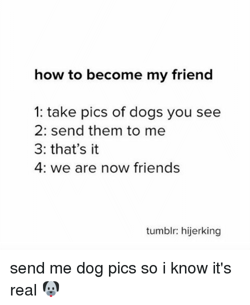 Dogs, Friends, and Memes: how to become my friend  1: take pics of dogs you see  2: send them to me  3: that's it  4: we are now friends  tumblr: hijerking send me dog pics so i know it's real 🐶