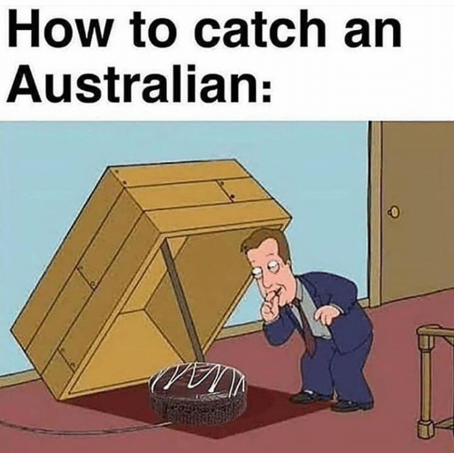 Memes, How To, and Australian: How to catch an  Australian:  0