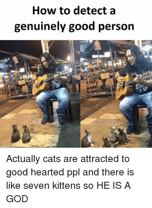 Cats, God, and Good: How to detect a  genuinely good person Actually cats are attracted to good hearted ppl and there is like seven kittens so HE IS A GOD