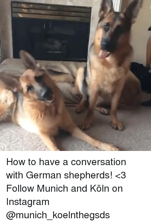 conversating: How to have a conversation with German shepherds! <3  Follow Munich and Köln on Instagram @munich_koelnthegsds