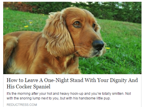 dignity: How to Leave A One-Night Stand With Your Dignity And  His Cocker Spaniel  It's the morning after your hot and heavy hook-up and you're totally smitten. Not  with the snoring lump next to you, but with his handsome little pup.  REDUCTRESS.COM