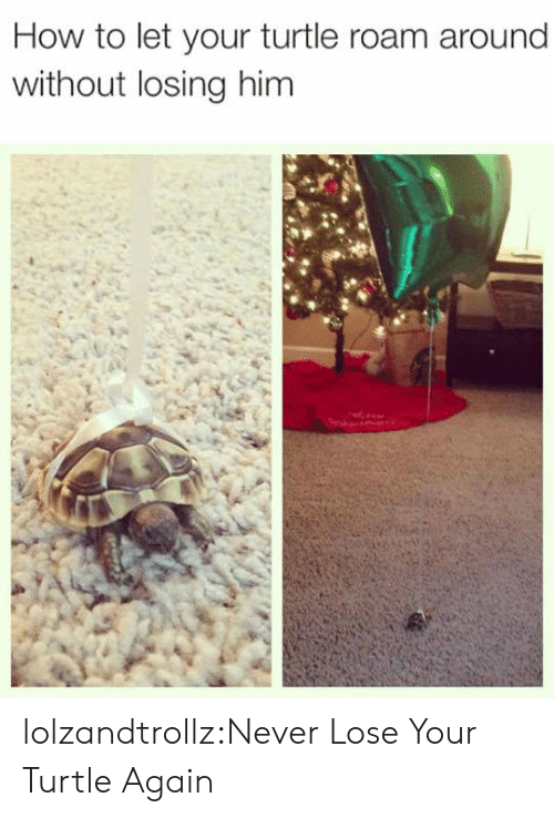 Never Lose: How to let your turtle roam around  without losing him lolzandtrollz:Never Lose Your Turtle Again
