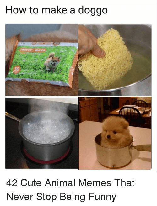 Cute, Funny, and Memes: How to make a doggo  30 42 Cute Animal Memes That Never Stop Being Funny
