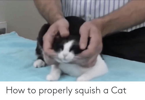 Properly: How to properly squish a Cat