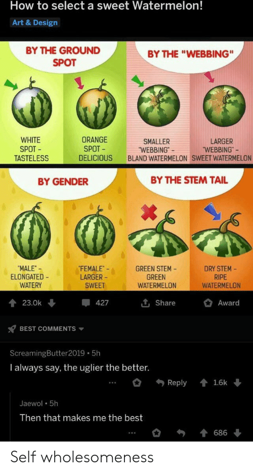 """Larger: How to select a sweet Watermelon!  Art & Design  BY THE GROUND  BY THE """"WEBBING""""  SPOT  WHITE  SPOT  TASTELESS  ORANGE  SPOT  LARGER  """"WEBBING""""  SMALLER  """"WEBBING""""  BLAND WATERMELON SWEET WATERMELON  DELICIOUS  BY THE STEM TAIL  BY GENDER  FEMALE  LARGER  DRY STEM-  RIPE  WATERMELON  """"MALE-  ELONGATED  WATERY  GREEN STEM  GREEN  WATERMELON  SWEET  Award  23.0k  427  Share  BEST COMMENTS  ScreamingButter 2019 5h  I always say, the uglier the better.  Reply  1.6k  Jaewol 5h  Then that makes me the best  686 Self wholesomeness"""