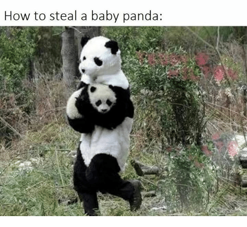 How To Steal: How to steal a baby panda: