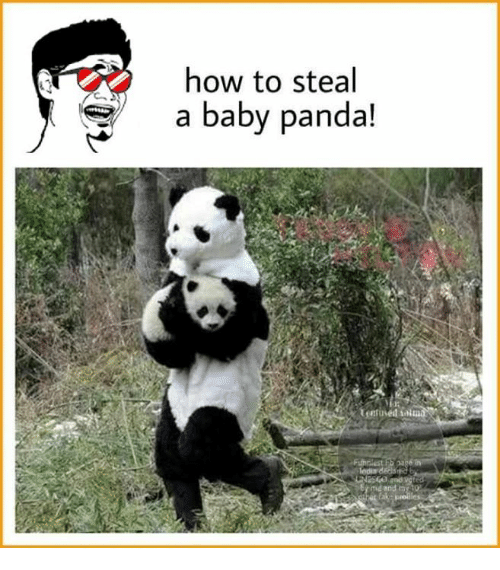 How To Steal: how to steal  a baby panda!
