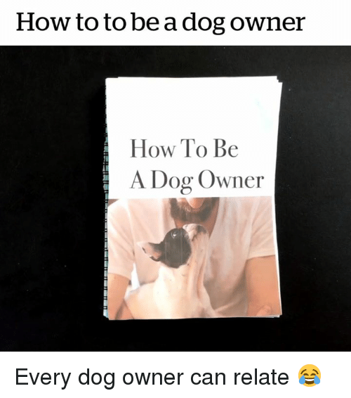 How To, How, and Dog: How to to be a dog owner  How To Be  A Dog Owner Every dog owner can relate 😂