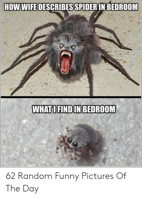 Funny, Pictures, and Wife: HOW WIFE DESCRIBES SPIDERIN BEDROOM  WHATOFINDIN BEDROOM 62 Random Funny Pictures Of The Day