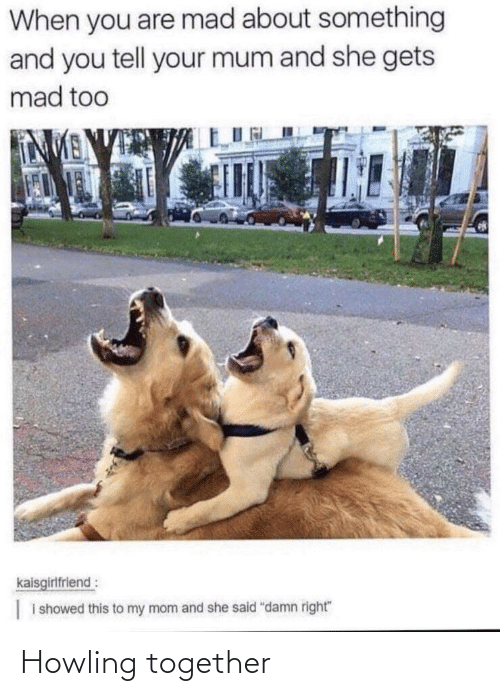 howling: Howling together