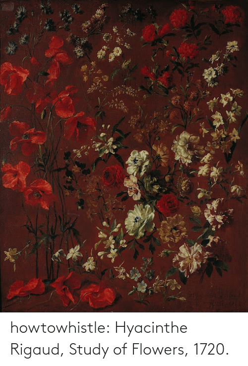 Tumblr, Blog, and Flowers: howtowhistle:  Hyacinthe Rigaud, Study of Flowers, 1720.