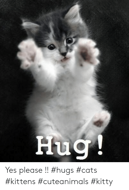 Cats, Kittens, and Yes: Hug Yes please !! #hugs #cats #kittens #cuteanimals #kitty