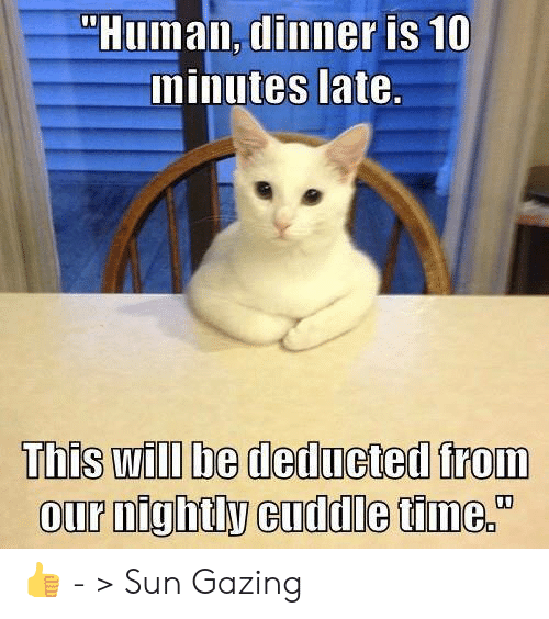 """Memes, Time, and 🤖: """"Human, dinner is 10  minutes late.  This will be deducted from  our nightly cuddle time."""" 👍 - > Sun Gazing"""