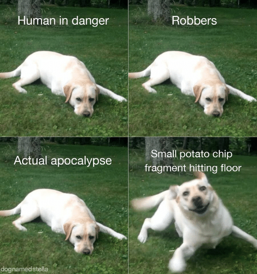Potato, Chip, and Human: Human in danger  Robbers  Small potato chip  Actual apocalypse  fragment hitting floor  dognamedstella