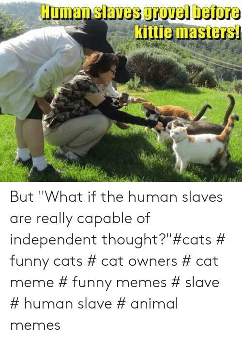 "cat meme: Human slaves grovel before  Kittie masters But ""What if the human slaves are really capable of independent thought?""#cats # funny cats # cat owners # cat meme # funny memes # slave # human slave # animal memes"