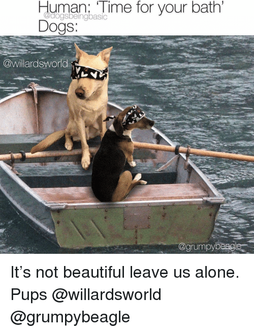 Being Alone, Beautiful, and Dogs: Human:  Time  for  your  bath  Dogs:  @dogsbeingbasiC  S.  willardsworld  @grumpybeagle It's not beautiful leave us alone. Pups @willardsworld @grumpybeagle