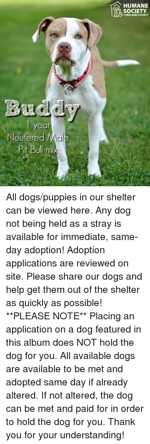 Dogs, Memes, and Puppies: HUMANE  SOCIETY  or MIDLAND COUNTY  Bu  ear  Neutered M  Pit Bull m All dogs/puppies in our shelter can be viewed here.  Any dog not being held as a stray is available for immediate, same-day adoption! Adoption applications are reviewed on site. Please share our dogs and help get them out of the shelter as quickly as possible!  **PLEASE NOTE**  Placing an application on a dog featured in this album does NOT hold the dog for you.  All available dogs are available to be met and adopted same day if already altered.  If not altered, the dog can be met and paid for in order to hold the dog for you.  Thank you for your understanding!