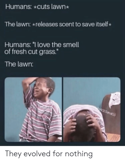 "Fresh, Love, and Smell: Humans: cuts lawn  The lawn: releases scent to save itself  Humans: ""I love the smell  of fresh cut grass.""  The lawn:  HACESandCo They evolved for nothing"