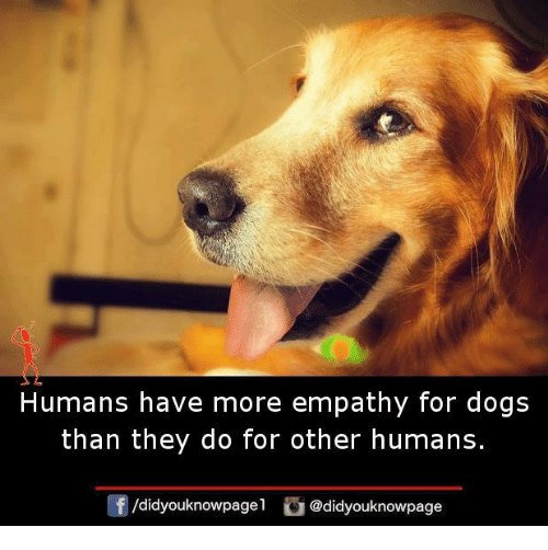 Dogs, Memes, and Empathy: Humans have more empathy for dogs  than they do for other humans  /didyouknowpagel @didyouknowpage