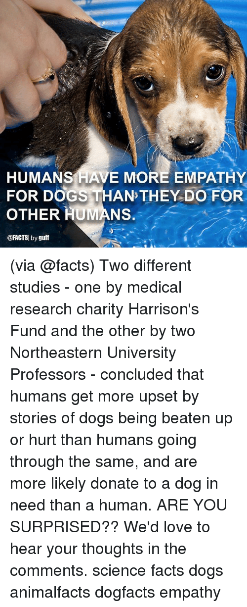 Dogs, Facts, and Love: HUMANS HAVE MORE EMPATHY  FOR DOGS THAN THEY DO FOR  OTHER HUMANS.  @FACTSI by guff (via @facts) Two different studies - one by medical research charity Harrison's Fund and the other by two Northeastern University Professors - concluded that humans get more upset by stories of dogs being beaten up or hurt than humans going through the same, and are more likely donate to a dog in need than a human. ARE YOU SURPRISED?? We'd love to hear your thoughts in the comments. science facts dogs animalfacts dogfacts empathy