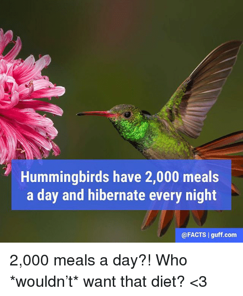 Hummingbirds: Hummingbirds have 2,000 meals  a day and hibernate every night  @FACTS guff com 2,000 meals a day?! Who *wouldn't* want that diet? <3