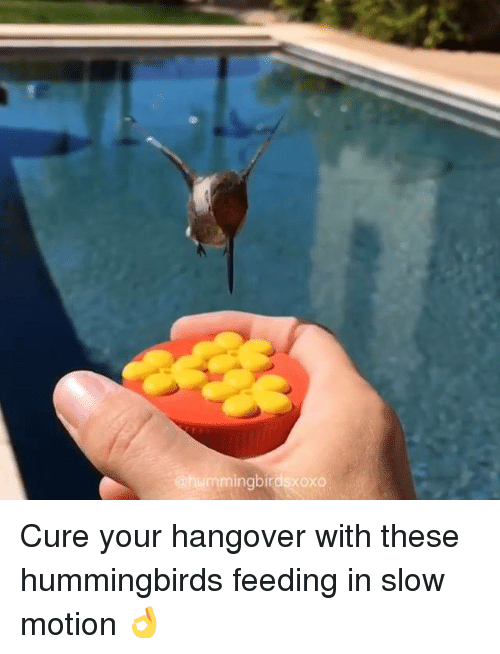 Hummingbirds: @hummingbirdsxoxo Cure your hangover with these hummingbirds feeding in slow motion 👌