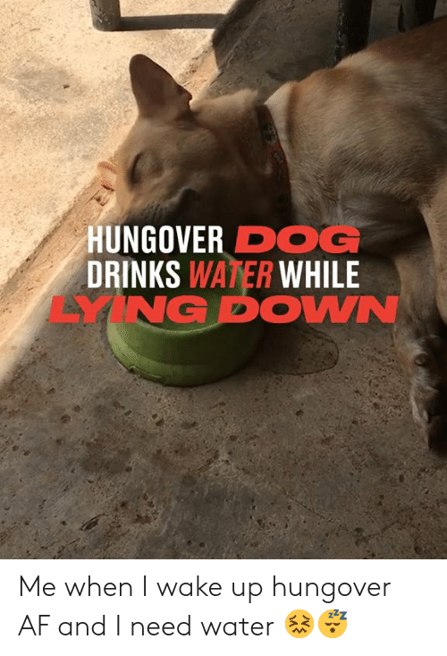 Af, Dank, and Water: HUNGOVER DOG  DRINKS WATER WHILE  YNG DOWN Me when I wake up hungover AF and I need water 😖😴