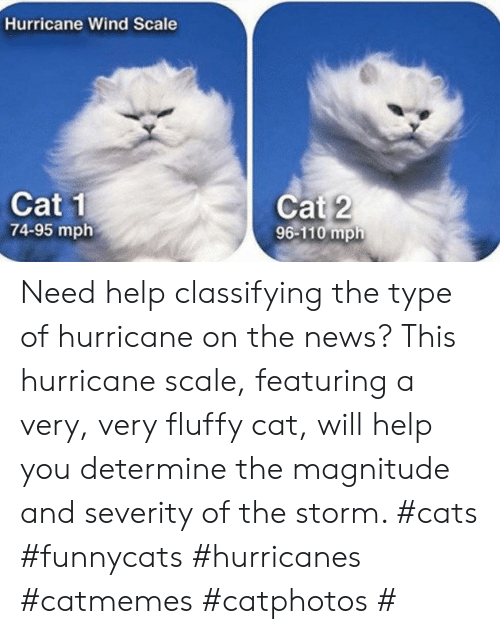 fluffy: Hurricane Wind Scale  Cat 1  74-95 mph  Cat 2  96-110 mph Need help classifying the type of hurricane on the news? This hurricane scale, featuring a very, very fluffy cat, will help you determine the magnitude and severity of the storm. #cats #funnycats #hurricanes #catmemes #catphotos #