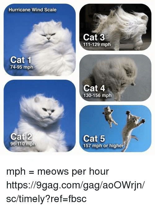 Scaling: Hurricane Wind Scale  Cat 3  111-129 mph  Cat 1  74-95 mplh  Cat 4  130-156 mph  Cat 2  96-110 mph  Cat 5  157 mph or higher mph = meows per hour https://9gag.com/gag/aoOWrjn/sc/timely?ref=fbsc