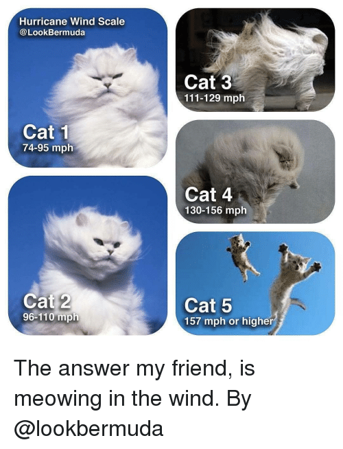 Andrew Bogut, Memes, and Hurricane: Hurricane Wind Scale  @LookBermuda  Cat 3  111-129 mph  Cat 1  74-95 mplh  Cat 4  130-156 mph  Cat 2  96-110 mph  Cat 5  157 mph or higher The answer my friend, is meowing in the wind. By @lookbermuda