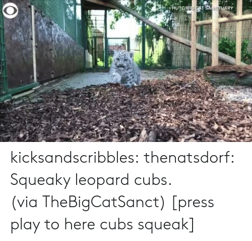 Cubs: HUTOBICAT SANCTUARY kicksandscribbles:  thenatsdorf: Squeaky leopard cubs. (via TheBigCatSanct) [press play to here cubs squeak]