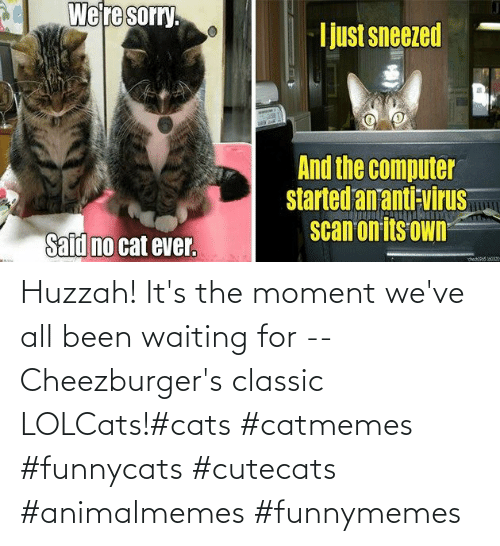 funnymemes: Huzzah! It's the moment we've all been waiting for -- Cheezburger's classic LOLCats!#cats #catmemes #funnycats #cutecats #animalmemes #funnymemes