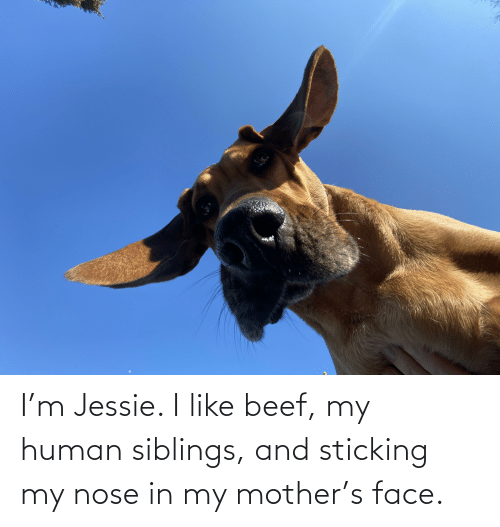 jessie: I'm Jessie. I like beef, my human siblings, and sticking my nose in my mother's face.