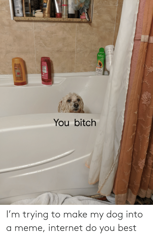 My Dog: I'm trying to make my dog into a meme, internet do you best