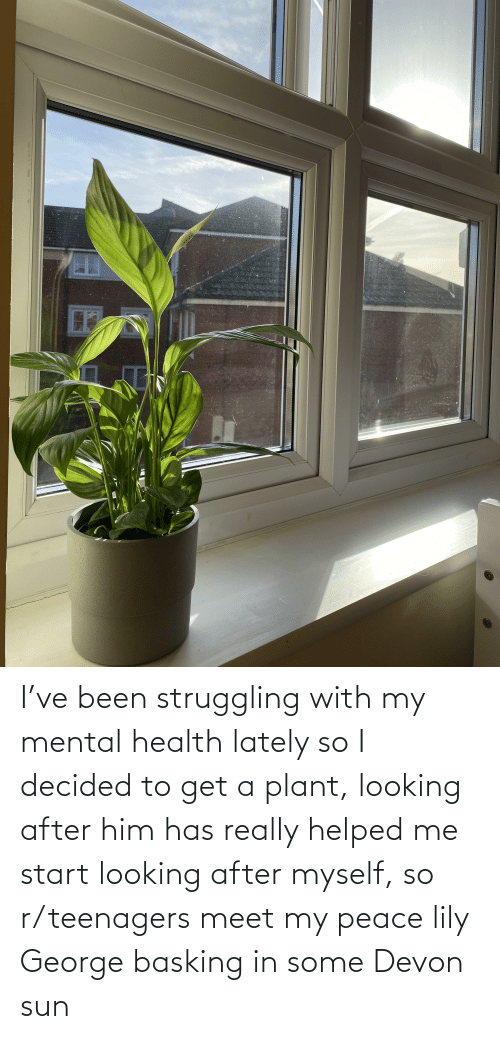 devon: I've been struggling with my mental health lately so I decided to get a plant, looking after him has really helped me start looking after myself, so r/teenagers meet my peace lily George basking in some Devon sun
