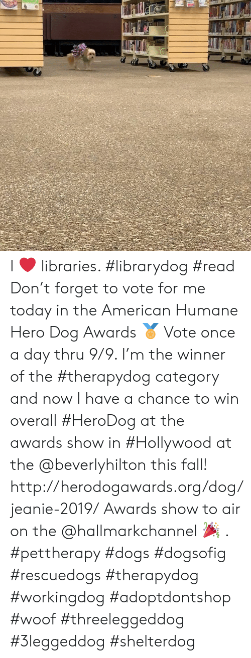 Hallmarkchannel: I ❤️ libraries. #librarydog #read  Don't forget to vote for me today in the American Humane Hero Dog Awards 🏅 Vote once a day thru 9/9.  I'm the winner of the #therapydog category and now I have a chance to win overall #HeroDog at the awards show in #Hollywood at the @beverlyhilton this fall!  http://herodogawards.org/dog/jeanie-2019/ Awards show to air on the @hallmarkchannel 🎉 . #pettherapy #dogs  #dogsofig #rescuedogs #therapydog #workingdog #adoptdontshop  #woof  #threeleggeddog #3leggeddog #shelterdog