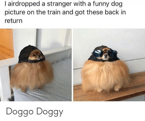 doggy: I airdropped a stranger with a funny dog  picture on the train and got these back in  return Doggo Doggy