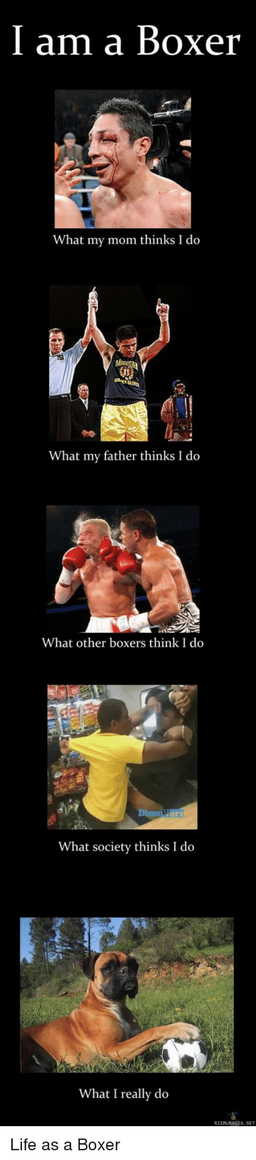 What I really do: I am a Boxer  What my mom thinks I do  What my father thinks I do  What other boxers think I do  Dime Wars  What society thinks I do  What I really do  RIEMURASIA. NET Life as a Boxer