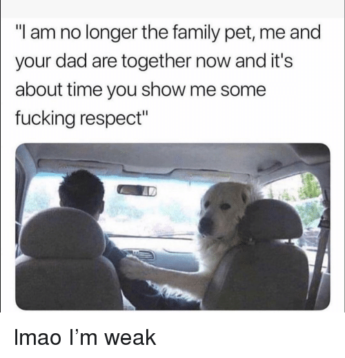 """Pet Me: """"I am no longer the family pet, me and  your dad are together now and it's  about time you show me some  fucking respect"""" lmao I'm weak"""