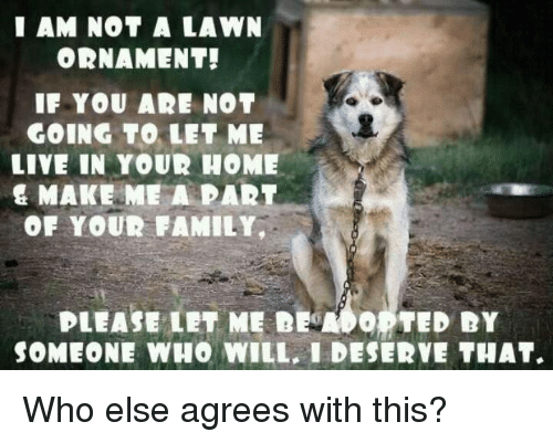 Ðÿ'©: I AM NOT A LAWN  ORNAMENT!  IF YOU AR NOT  GOING TO LET ME  LIVE IN YOUR HOME  & MAKE ME A PART  OF YOUR FAMILY,  PLEASE LET ME DEMO。 TED DY  SOMEONE WHO WILL, I DESERVE THAT. Who else agrees with this?