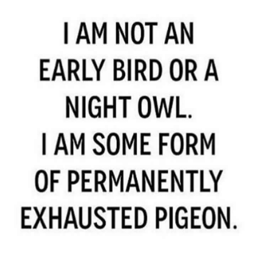 Owling: I AM NOT AN  EARLY BIRD OR A  NIGHT OWL  I AM SOME FORM  OF PERMANENTLY  EXHAUSTED PIGEON