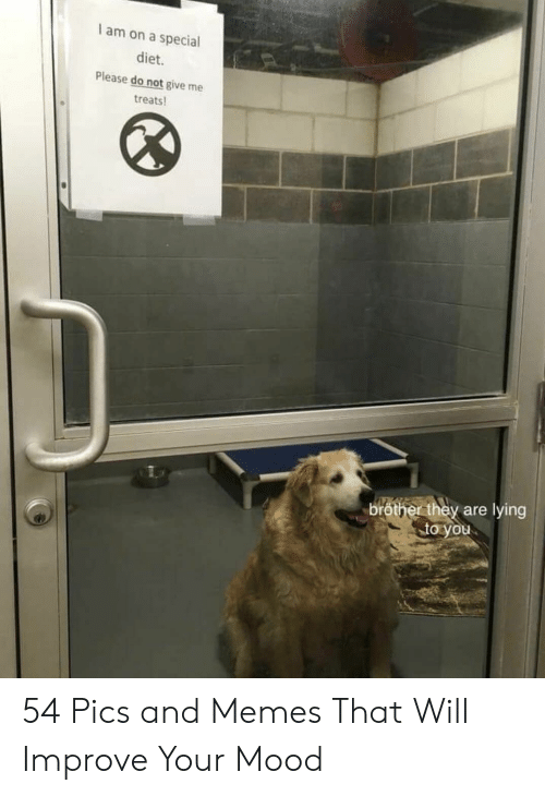 Memes, Mood, and Diet: I am on a special  diet.  Please do not give me  treats  bröther they are lying  to you 54 Pics and Memes That Will Improve Your Mood
