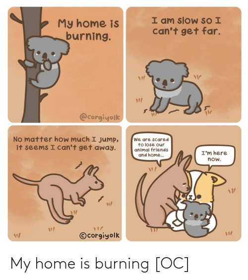 Home: I am slow SO I  can't get far.  My home is  burning.  @corgiyolk  No matter how much I jump,  it seems I can't get away.  We are scared  to lose our  animal friends  and home..  I'm here  now.  ©corgiyolk My home is burning [OC]