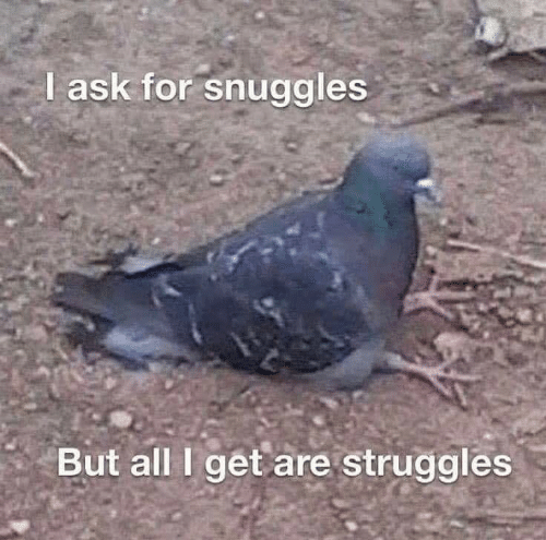 snuggles: I ask for snuggles  But all I get are struggles